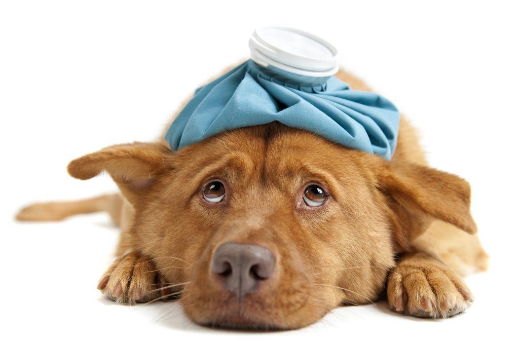 Hundesygeforsikring