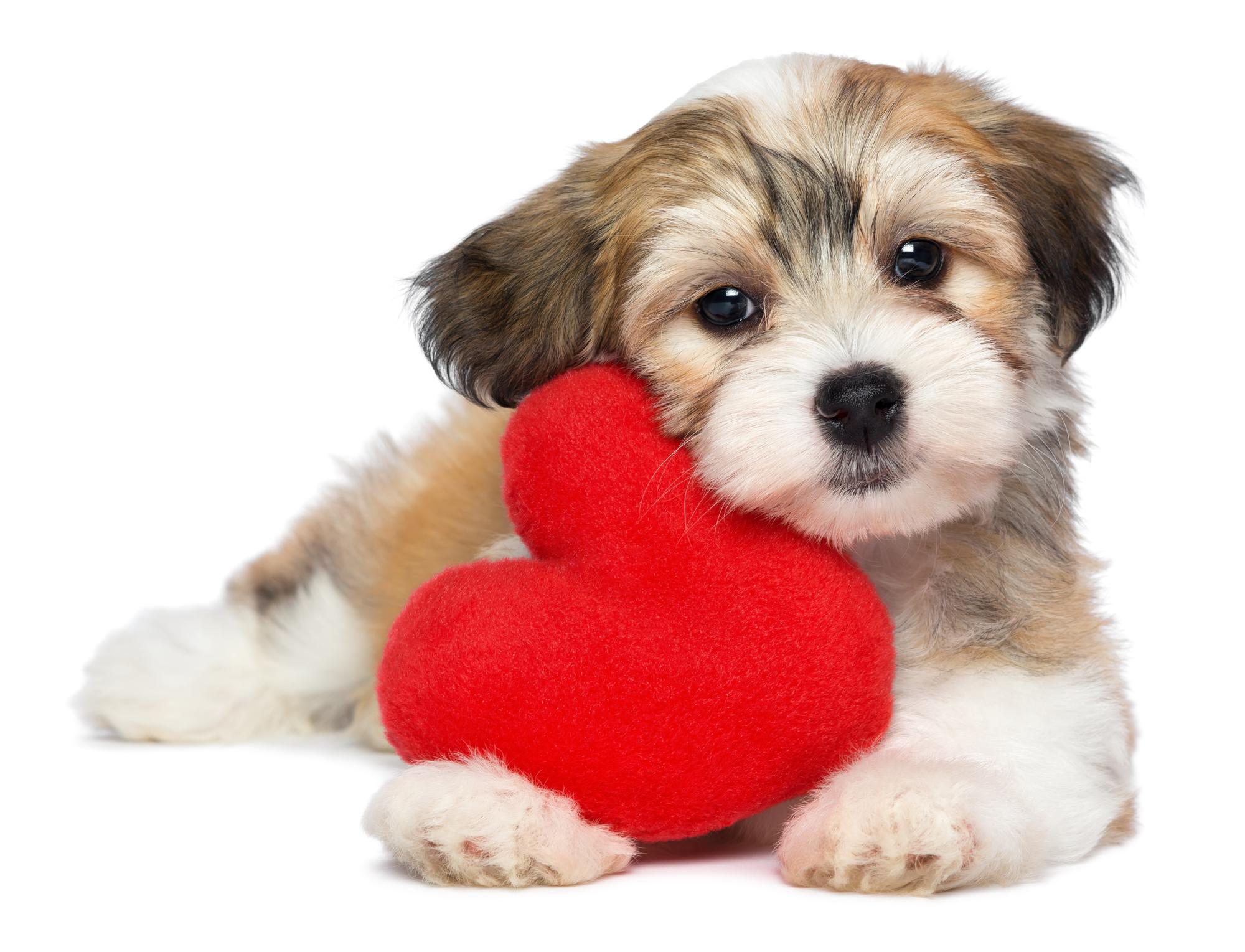 Kærlig hund