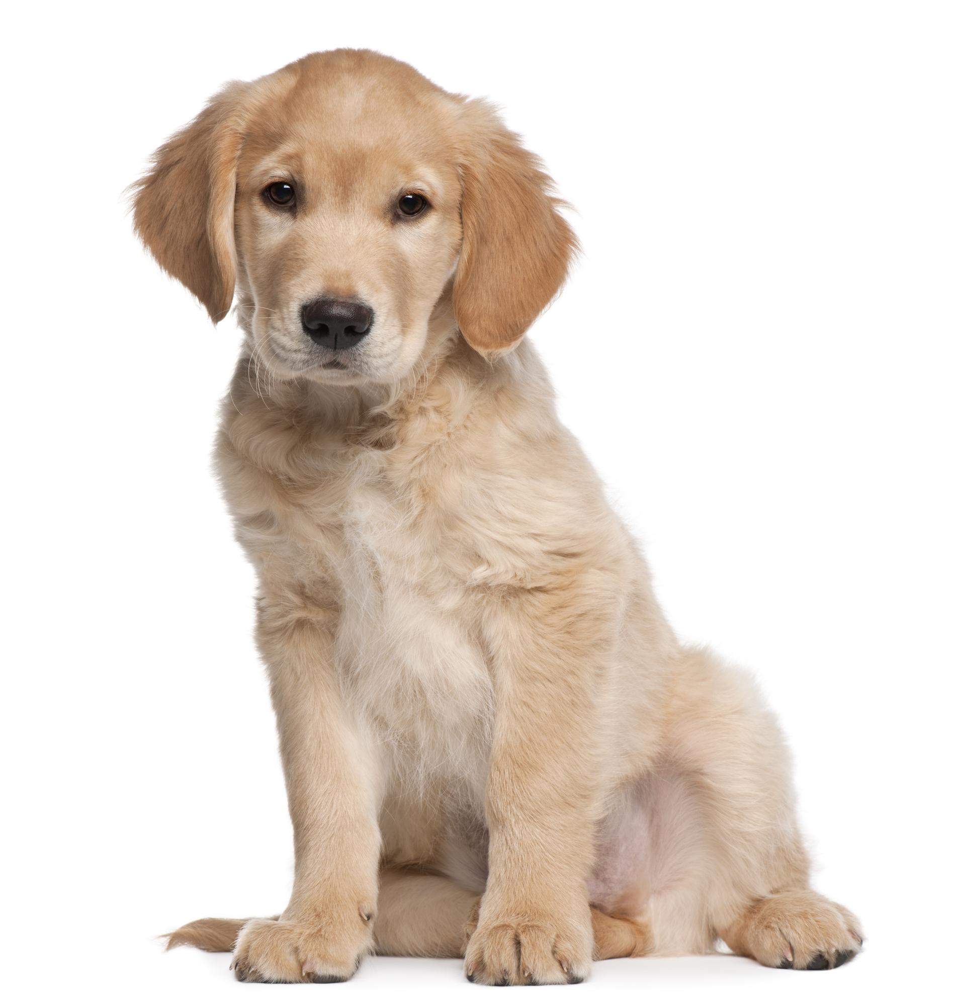 Veltilpas hund