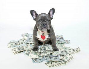 Hund og økonomi