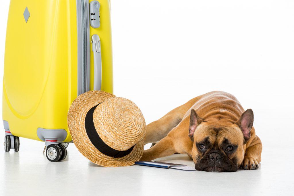 Rejse med hund