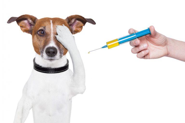 Hund-hos-dyrlægen-768x512
