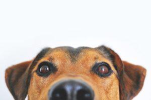 Mobilspil som enhver hundeejer bør prøve