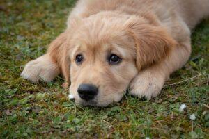 Mangler du en dyrelæge til din hund?