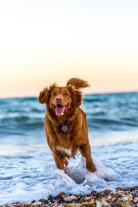 Få en glad hund med god økonomi