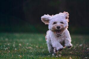 Den bedste online underholdning for hundeelskeren