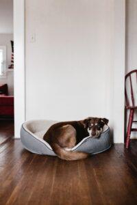 Vælg den rigtige hundeseng til din hund